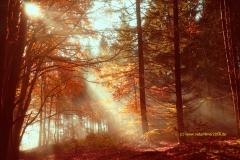 Herbststimmung, Sonne vertreibt den Nebel