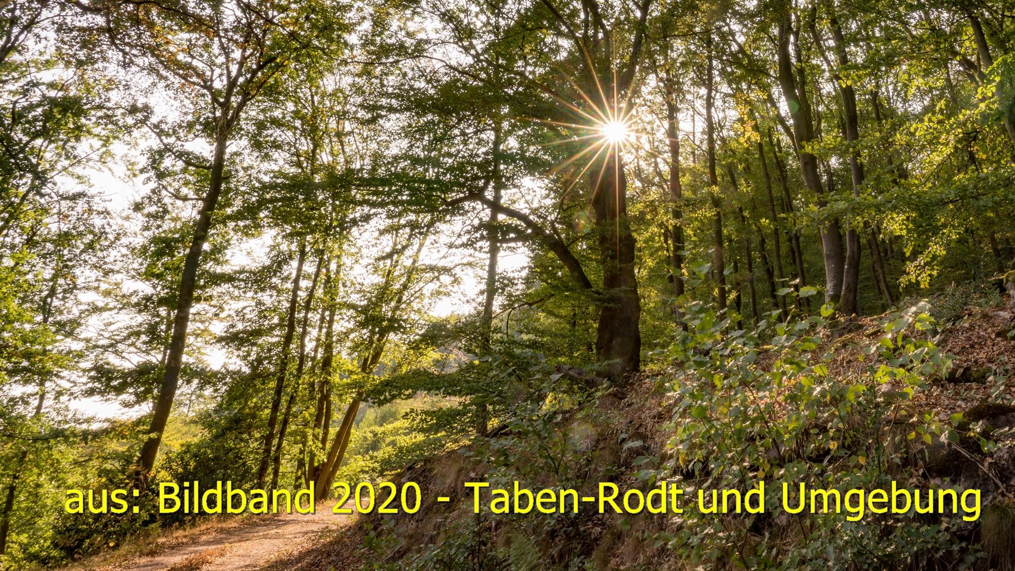 Im Tabener-Urwald